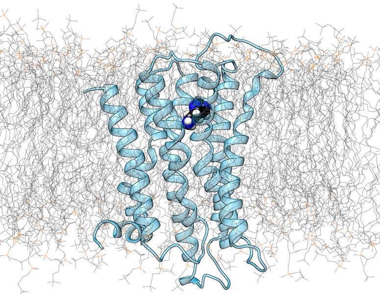 Struktur des Histamin-H1-Rezeptors