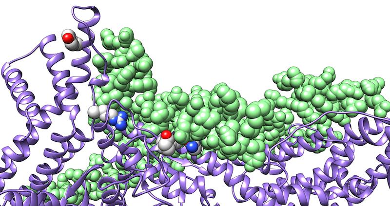 Protein-Protein-Komplex CYFIP und WAVE1
